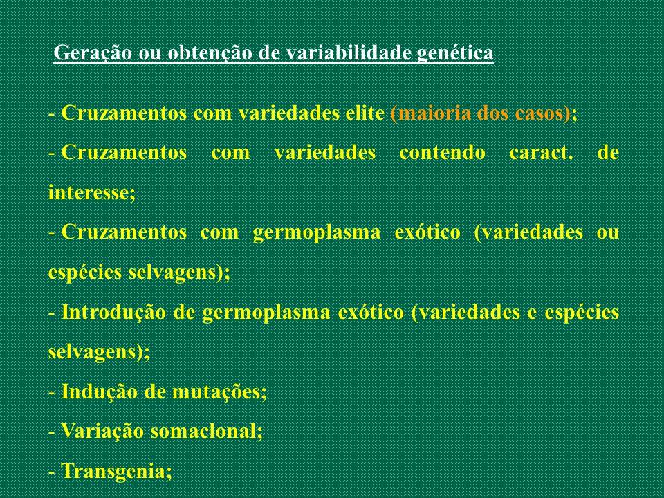 Geração ou obtenção de variabilidade genética - Cruzamentos com variedades elite (maioria dos casos); - Cruzamentos com variedades contendo caract. de