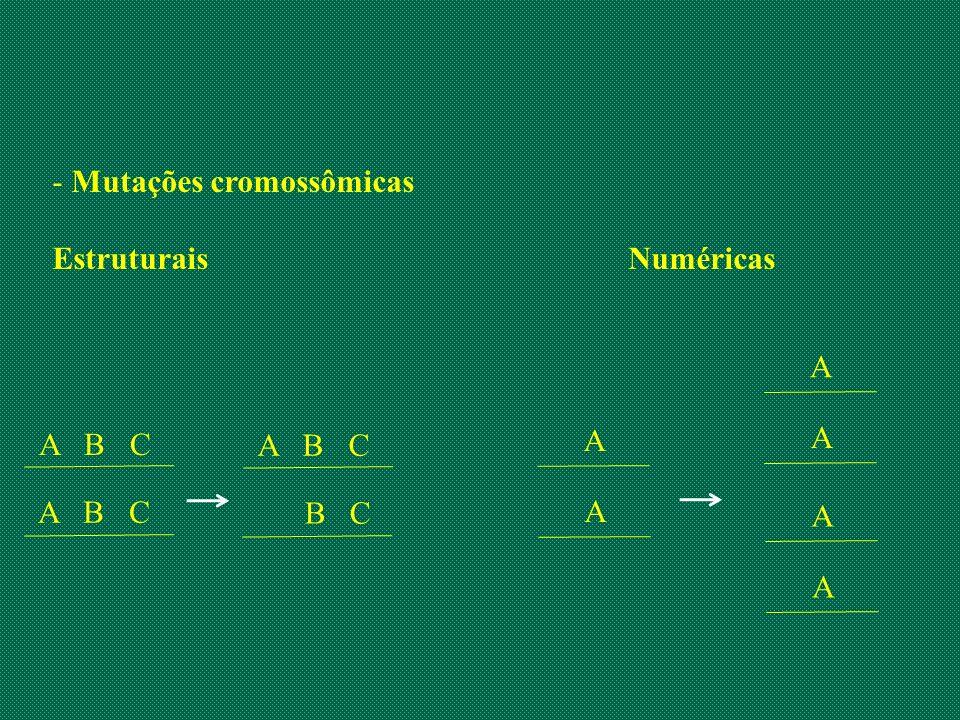 - Mutações cromossômicas EstruturaisNuméricas A B C B C A A A A A A
