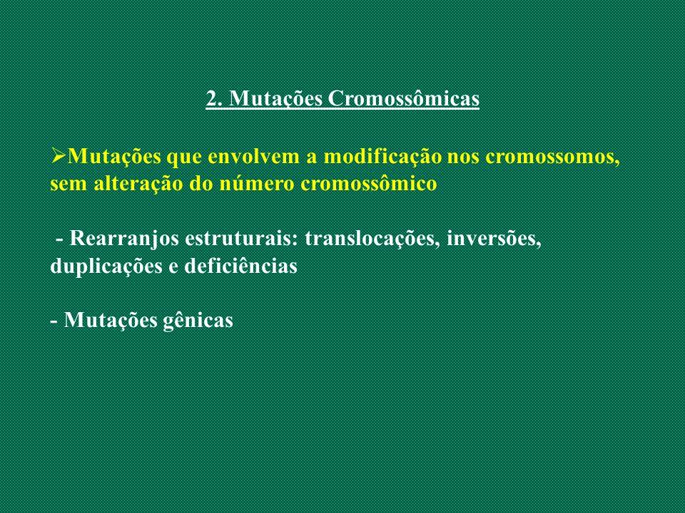 2. Mutações Cromossômicas Mutações que envolvem a modificação nos cromossomos, sem alteração do número cromossômico - Rearranjos estruturais: transloc