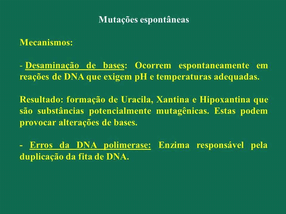 Mutações espontâneas Mecanismos: - Desaminação de bases: Ocorrem espontaneamente em reações de DNA que exigem pH e temperaturas adequadas. Resultado: