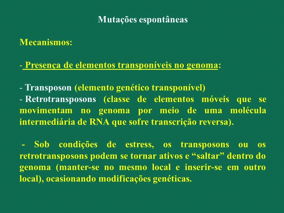 Mutações espontâneas Mecanismos: - Presença de elementos transponíveis no genoma: - Transposon (elemento genético transponível) - Retrotransposons (cl