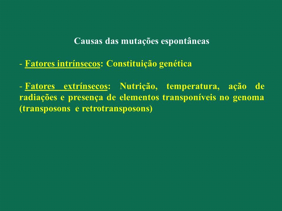 Causas das mutações espontâneas - Fatores intrínsecos: Constituição genética - Fatores extrínsecos: Nutrição, temperatura, ação de radiações e presenç