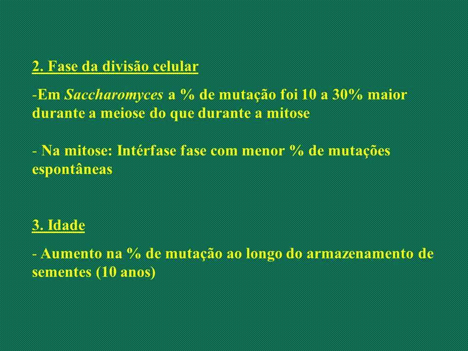 2. Fase da divisão celular -Em Saccharomyces a % de mutação foi 10 a 30% maior durante a meiose do que durante a mitose - Na mitose: Intérfase fase co