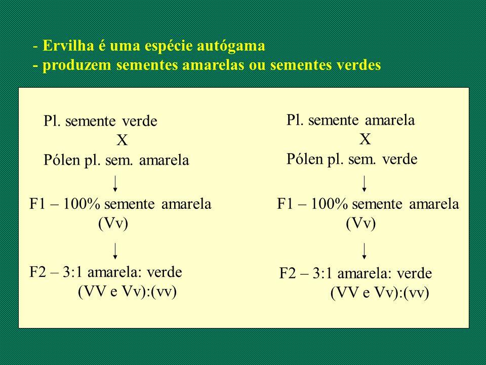 - Ervilha é uma espécie autógama - produzem sementes amarelas ou sementes verdes Pl. semente verde X Pólen pl. sem. amarela Pl. semente amarela X Póle