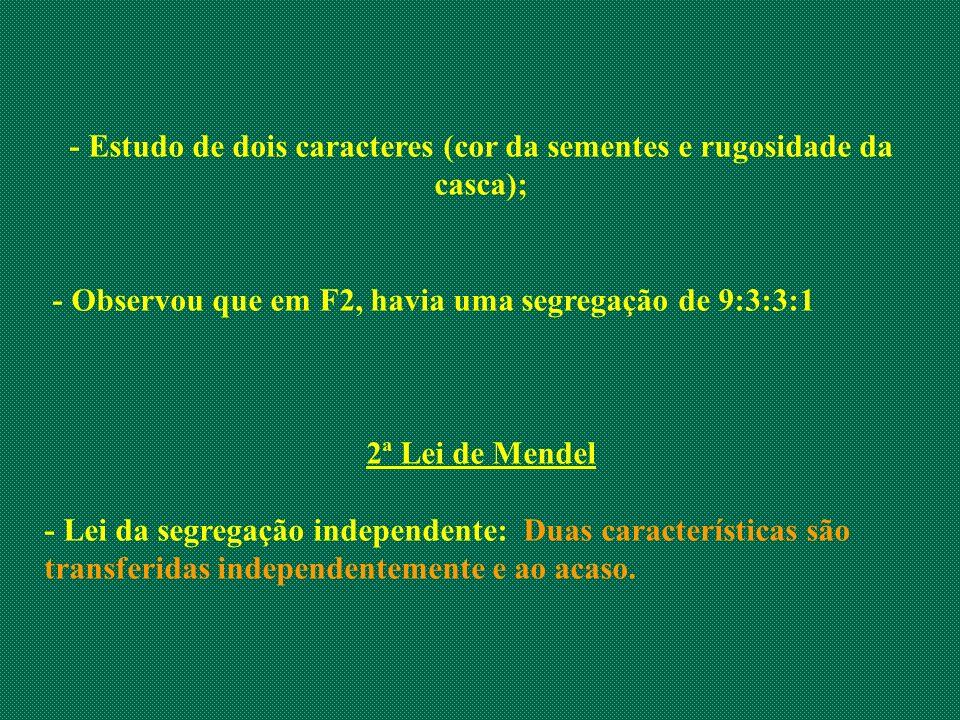 - Estudo de dois caracteres (cor da sementes e rugosidade da casca); - Observou que em F2, havia uma segregação de 9:3:3:1 2ª Lei de Mendel - Lei da s