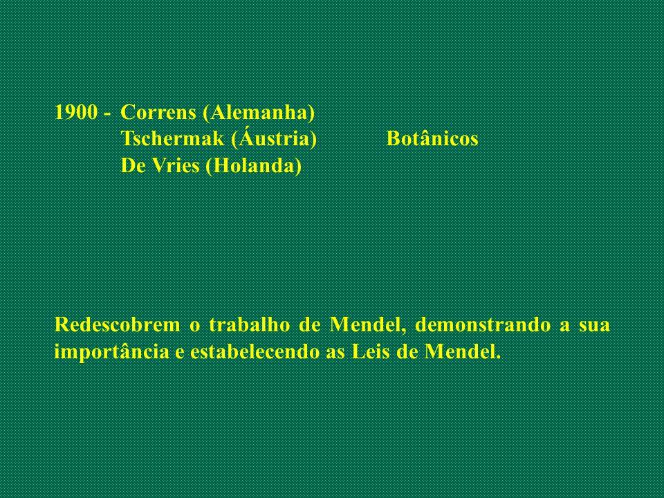 1900 -Correns (Alemanha) Tschermak (Áustria)Botânicos De Vries (Holanda) Redescobrem o trabalho de Mendel, demonstrando a sua importância e estabelece