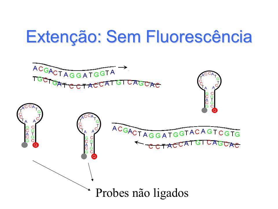 Extenção: Sem Fluorescência Probes não ligados