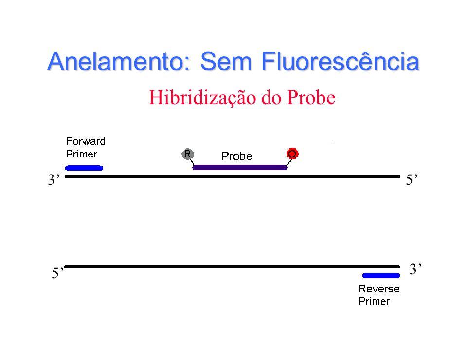 Anelamento: Sem Fluorescência 3 3 5 5 Hibridização do Probe
