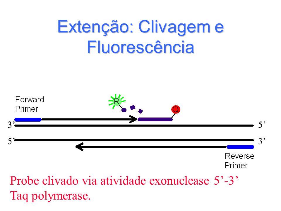 Extenção: Clivagem e Fluorescência Probe clivado via atividade exonuclease 5-3 Taq polymerase. 3 35 5