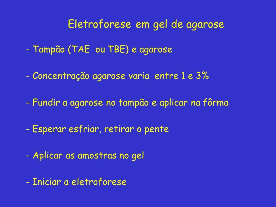 Eletroforese em gel de agarose - Tampão (TAE ou TBE) e agarose - Concentração agarose varia entre 1 e 3% - Fundir a agarose no tampão e aplicar na fôrma - Esperar esfriar, retirar o pente - Aplicar as amostras no gel - Iniciar a eletroforese
