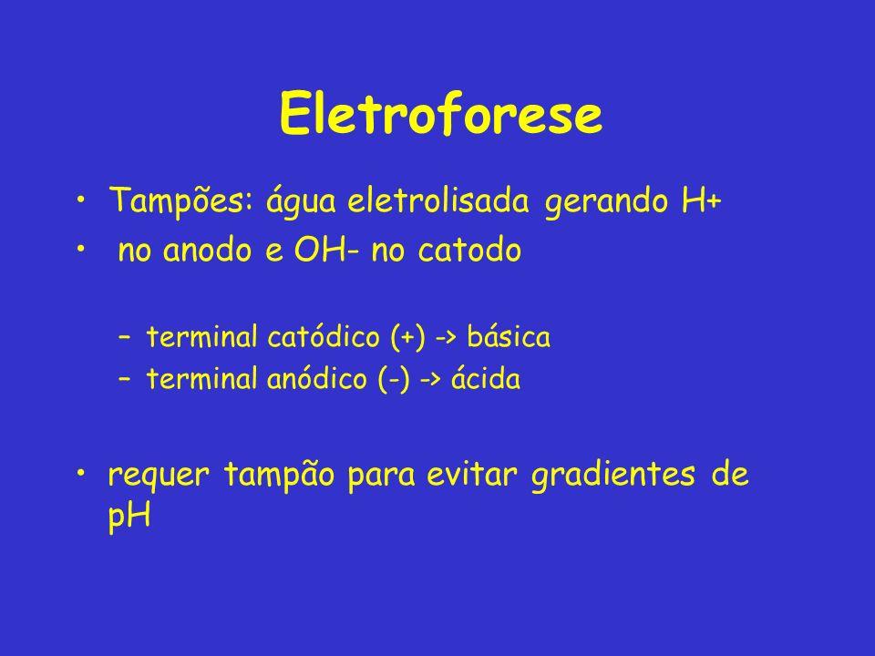 Eletroforese Tampões: água eletrolisada gerando H+ no anodo e OH- no catodo –terminal catódico (+) -> básica –terminal anódico (-) -> ácida requer tampão para evitar gradientes de pH