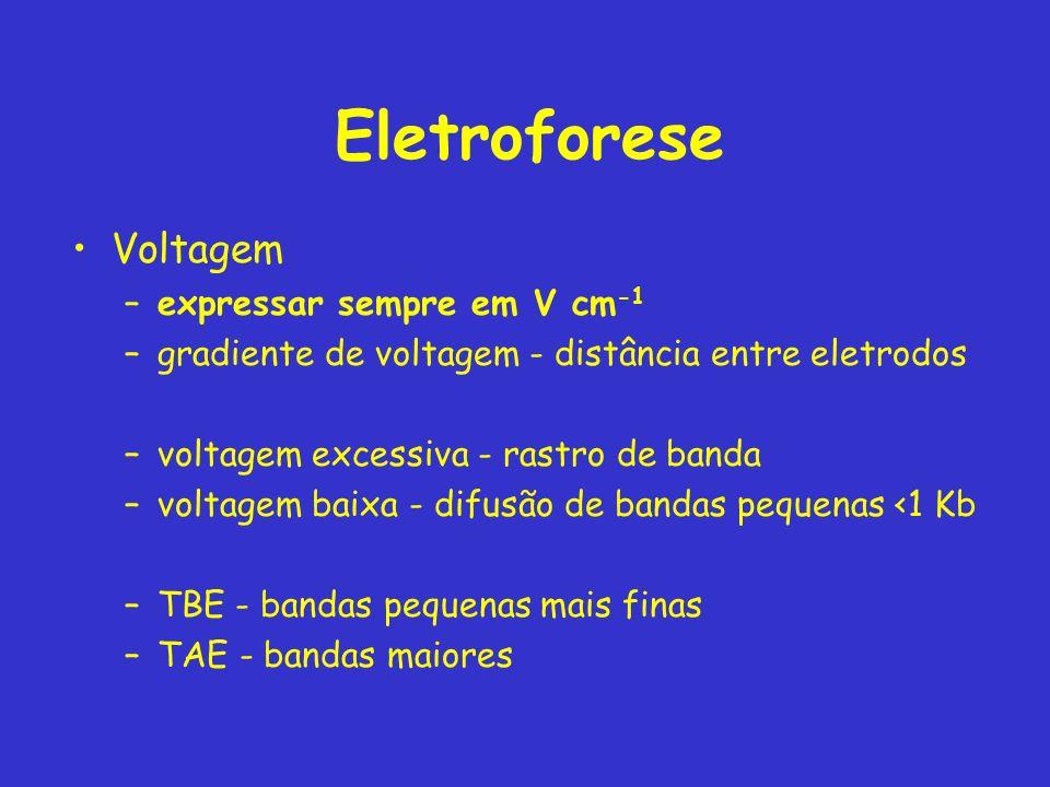 Eletroforese Voltagem –expressar sempre em V cm -1 –gradiente de voltagem - distância entre eletrodos –voltagem excessiva - rastro de banda –voltagem baixa - difusão de bandas pequenas <1 Kb –TBE - bandas pequenas mais finas –TAE - bandas maiores