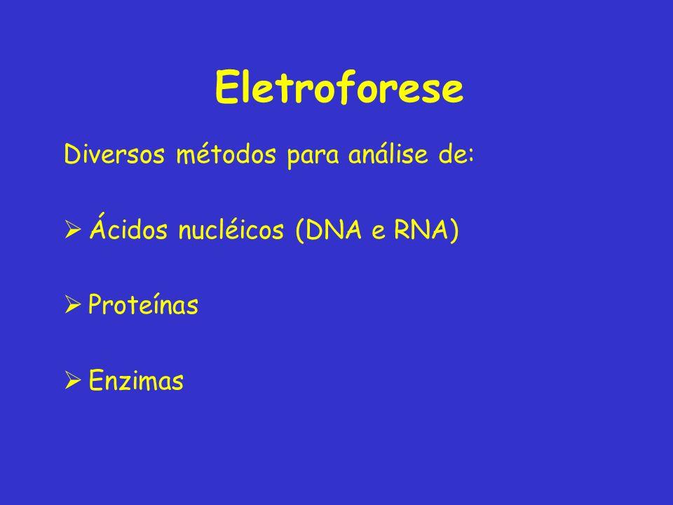 Eletroforese Diversos métodos para análise de: Ácidos nucléicos (DNA e RNA) Proteínas Enzimas