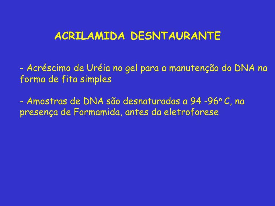 ACRILAMIDA DESNTAURANTE - Acréscimo de Uréia no gel para a manutenção do DNA na forma de fita simples - Amostras de DNA são desnaturadas a 94 -96 o C, na presença de Formamida, antes da eletroforese
