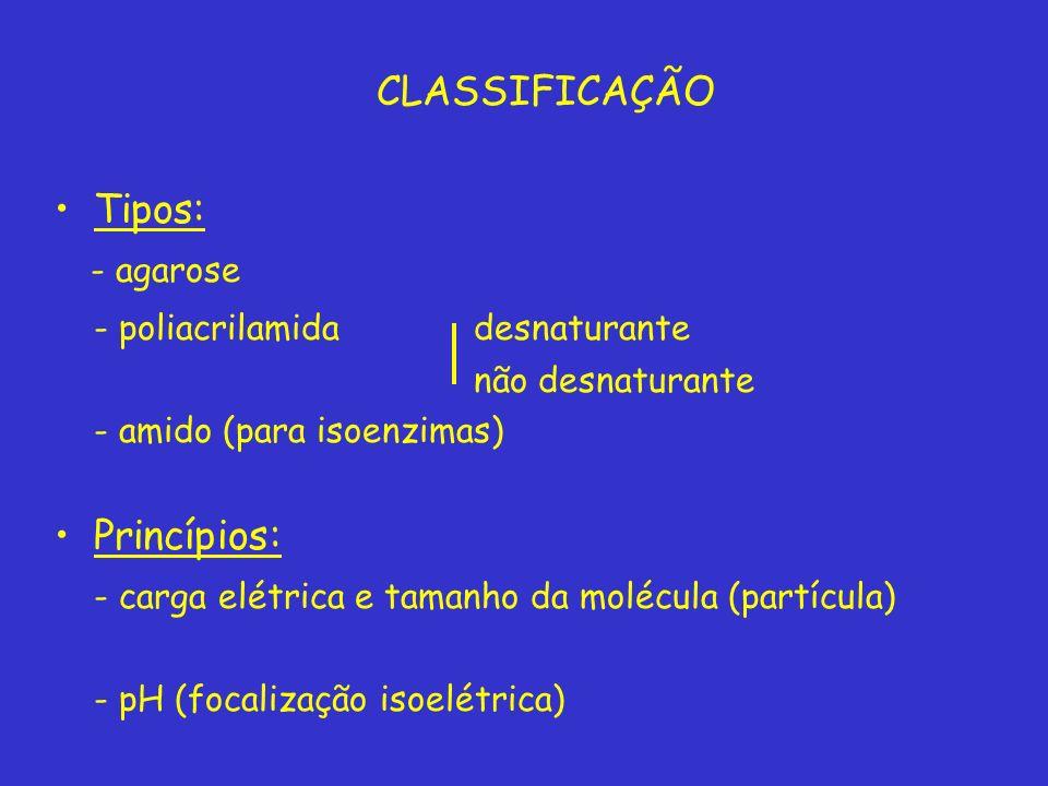 CLASSIFICAÇÃO Tipos: - agarose - poliacrilamida desnaturante não desnaturante - amido (para isoenzimas) Princípios: - carga elétrica e tamanho da molécula (partícula) - pH (focalização isoelétrica)