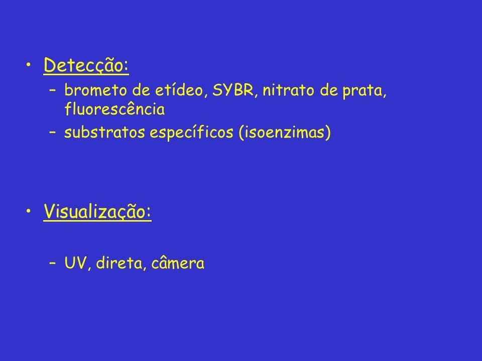 Detecção: –brometo de etídeo, SYBR, nitrato de prata, fluorescência –substratos específicos (isoenzimas) Visualização: –UV, direta, câmera