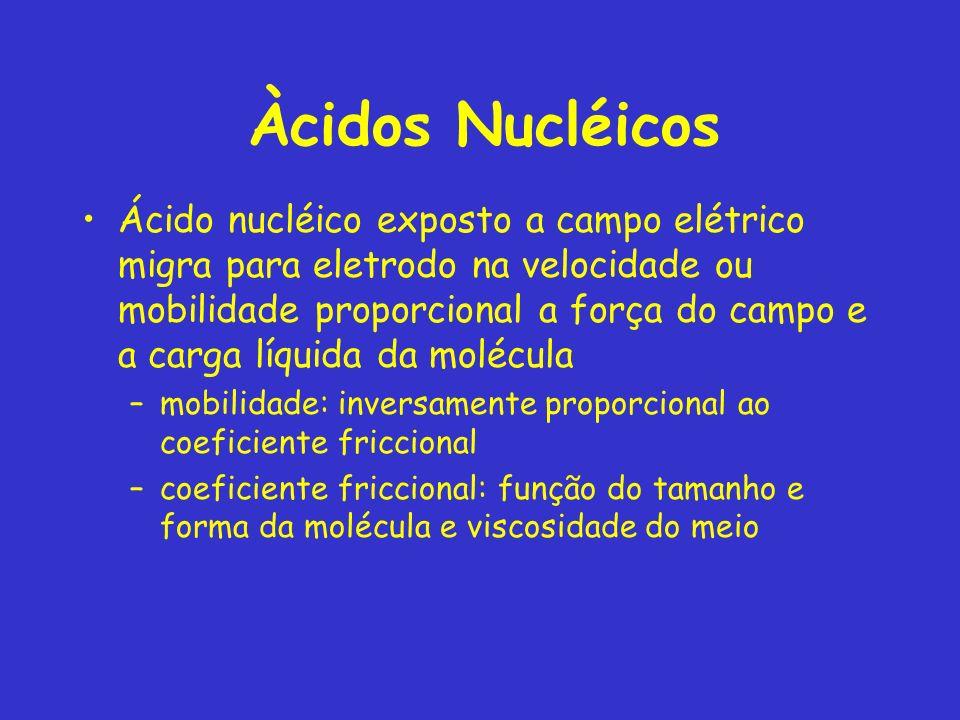 Àcidos Nucléicos Ácido nucléico exposto a campo elétrico migra para eletrodo na velocidade ou mobilidade proporcional a força do campo e a carga líquida da molécula –mobilidade: inversamente proporcional ao coeficiente friccional –coeficiente friccional: função do tamanho e forma da molécula e viscosidade do meio