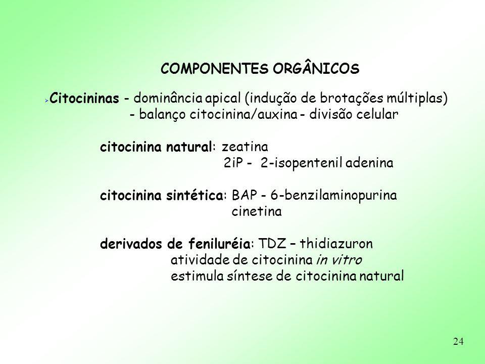 24 COMPONENTES ORGÂNICOS Citocininas - dominância apical (indução de brotações múltiplas) - balanço citocinina/auxina - divisão celular citocinina nat