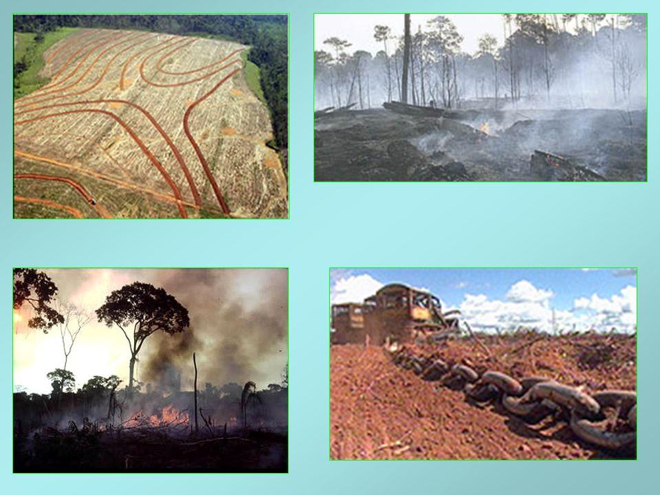 POLUIÇÃO VISUAL Exploração de Rochas Fosfáticas e de calcário