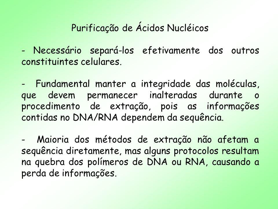 Purificação de Ácidos Nucléicos - A quebra dos polímeros afeta mais DNA do que RNA, mas a hidrólise enzimática (nucleases) afeta mais os RNAs do que DNA.