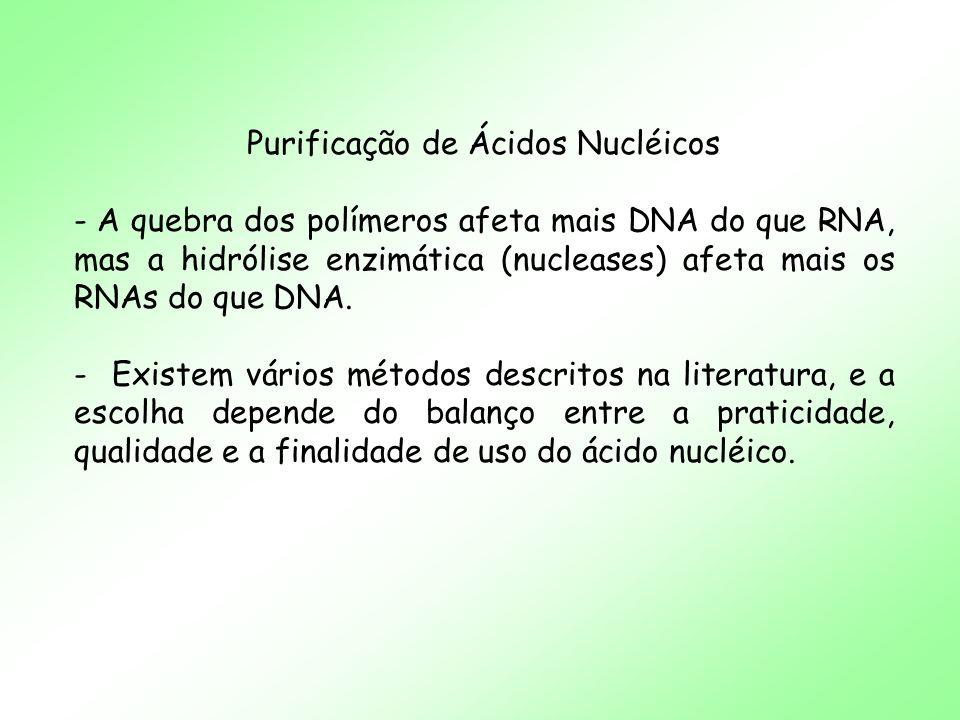 Purificação de Ácidos Nucléicos - A quebra dos polímeros afeta mais DNA do que RNA, mas a hidrólise enzimática (nucleases) afeta mais os RNAs do que D