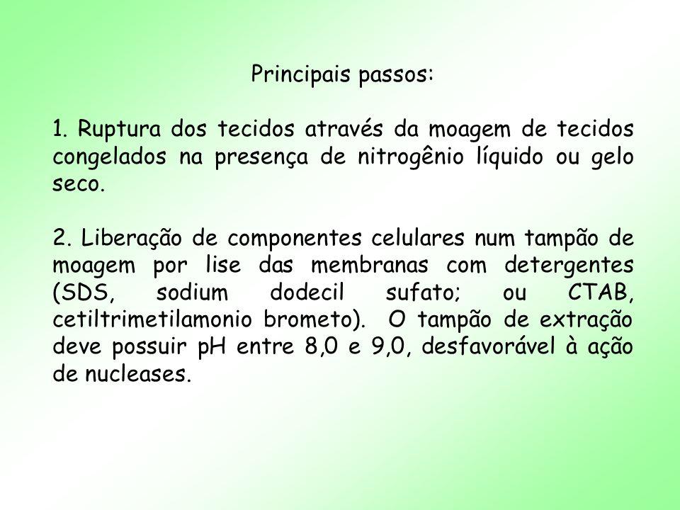 Principais passos: 1. Ruptura dos tecidos através da moagem de tecidos congelados na presença de nitrogênio líquido ou gelo seco. 2. Liberação de comp