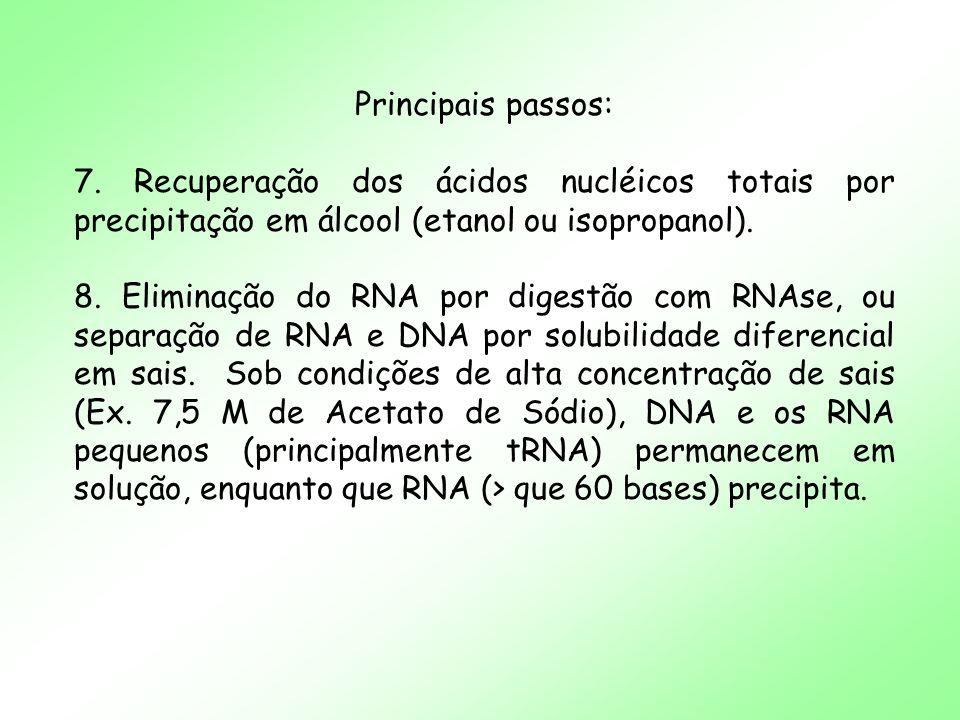 Contaminação com Polissacarídeos - Contaminantes (polifenóis, polissacarídeos etc.) interferem na atividade de enzimas de restrição e no PCR - A contaminação por polissacarídeos consiste na principal contaminação afetando a pureza do DNA extraído de plantas.