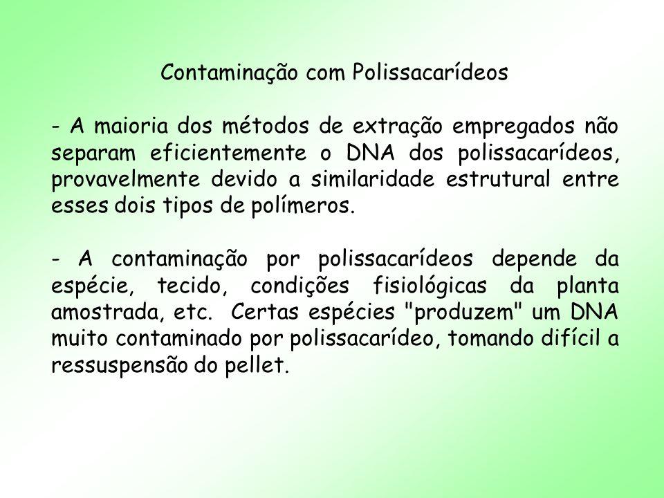 Contaminação com Polissacarídeos - A maioria dos métodos de extração empregados não separam eficientemente o DNA dos polissacarídeos, provavelmente de