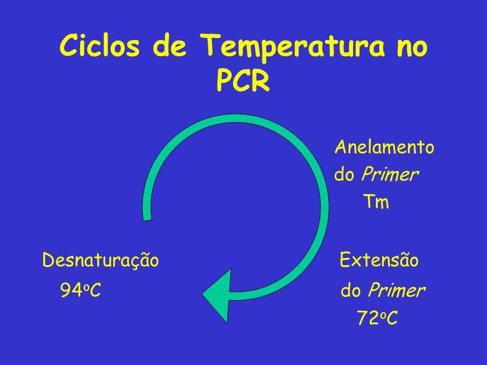 Ciclos de Temperatura no PCR Anelamento do Primer Tm Desnaturação Extensão 94 o C do Primer 72 o C