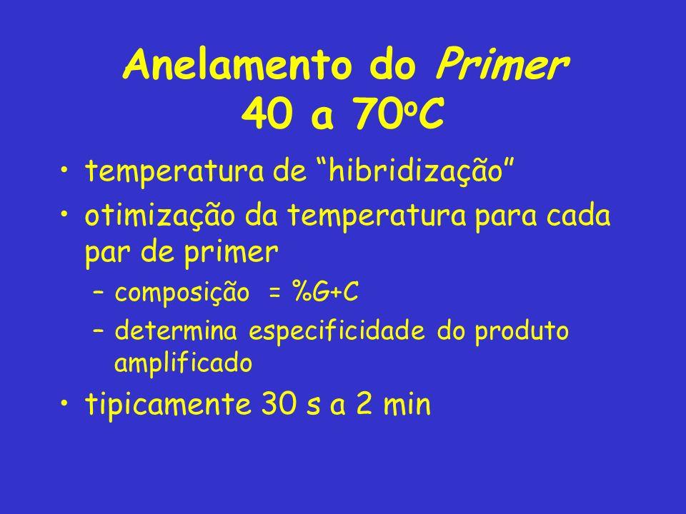 Anelamento do Primer 40 a 70 o C temperatura de hibridização otimização da temperatura para cada par de primer –composição = %G+C –determina especificidade do produto amplificado tipicamente 30 s a 2 min