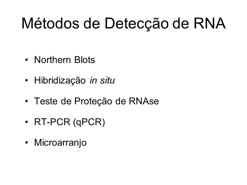 Métodos de Detecção de RNA Northern Blots Hibridização in situ Teste de Proteção de RNAse RT-PCR (qPCR) Microarranjo