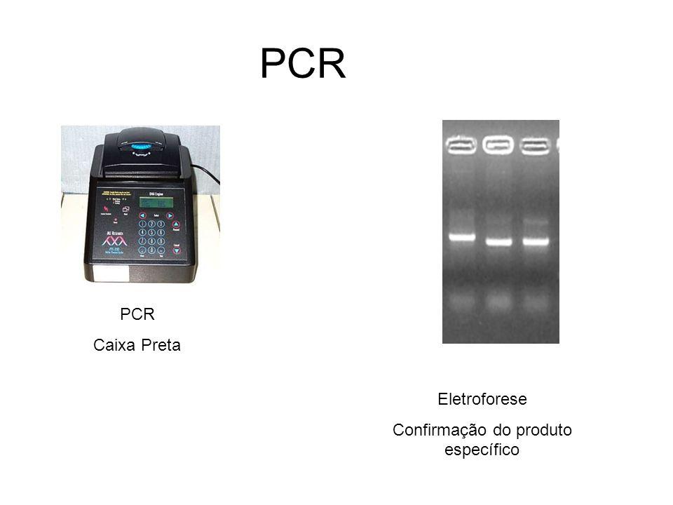 PCR Eletroforese Confirmação do produto específico PCR Caixa Preta