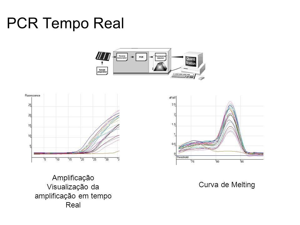 PCR Tempo Real Amplificação Visualização da amplificação em tempo Real Curva de Melting