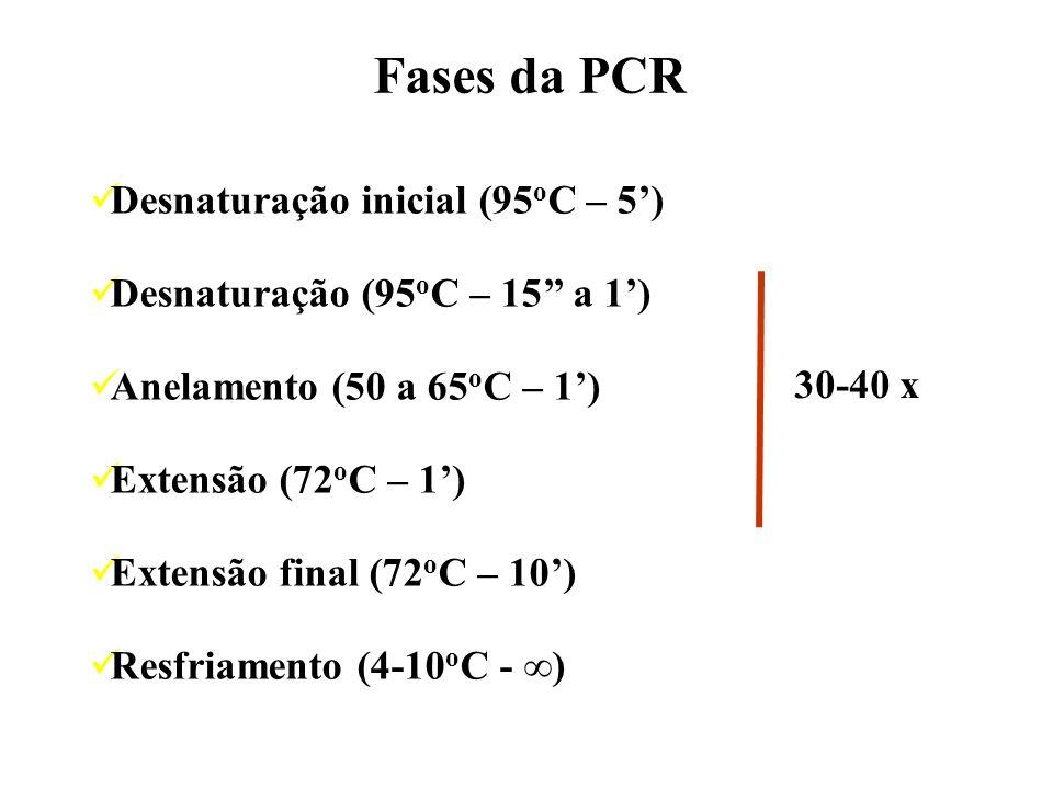 Desnaturação inicial (95 o C – 5) Desnaturação (95 o C – 15 a 1) Anelamento (50 a 65 o C – 1) Extensão (72 o C – 1) Extensão final (72 o C – 10) Resfr