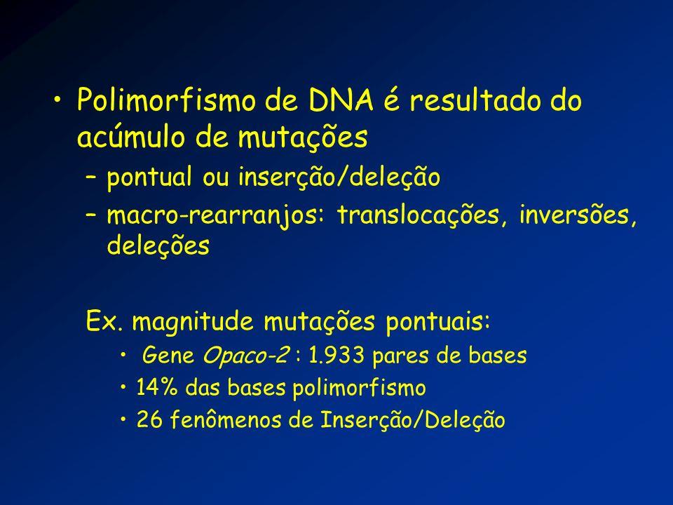 Polimorfismo de DNA é resultado do acúmulo de mutações –pontual ou inserção/deleção –macro-rearranjos: translocações, inversões, deleções Ex. magnitud