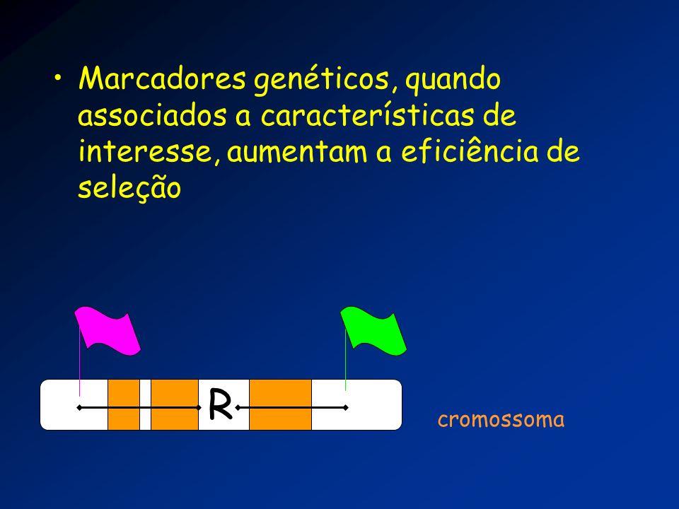 Marcadores genéticos, quando associados a características de interesse, aumentam a eficiência de seleção R cromossoma
