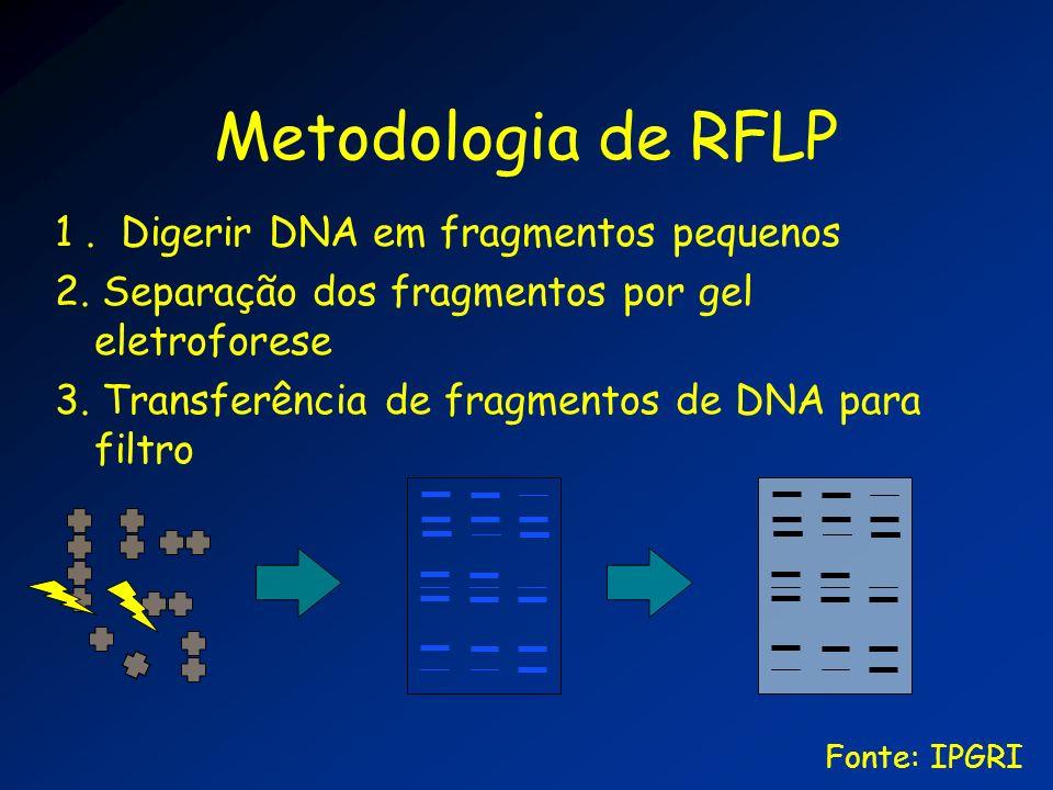 Metodologia de RFLP 1. Digerir DNA em fragmentos pequenos 2. Separação dos fragmentos por gel eletroforese 3. Transferência de fragmentos de DNA para