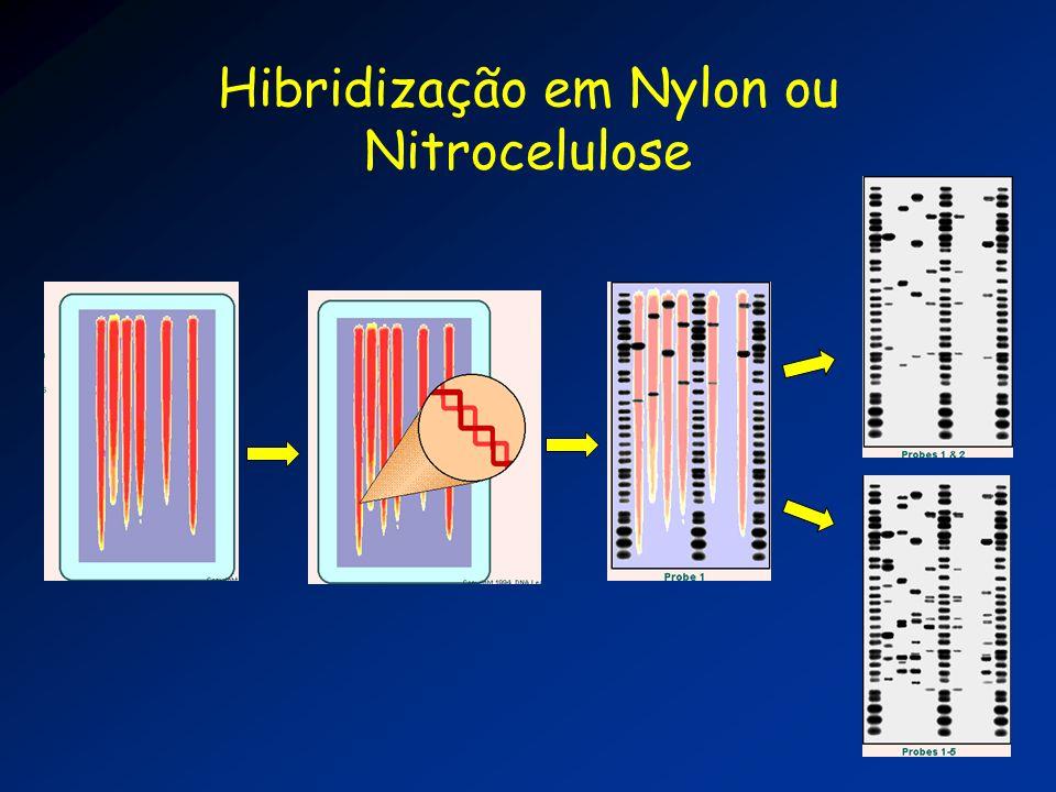 Hibridização em Nylon ou Nitrocelulose