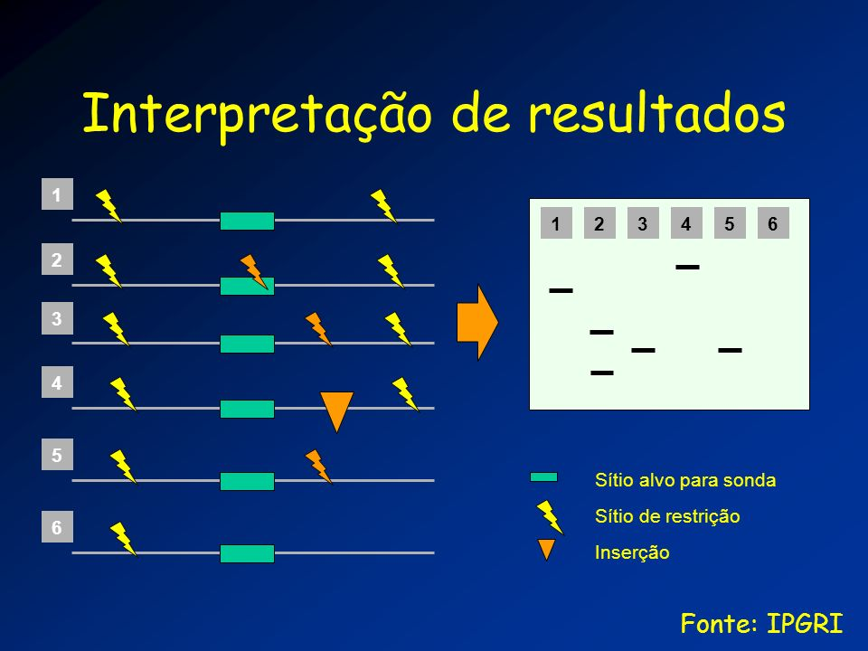 Interpretação de resultados 1 2 3 4 5 6 123456 Sítio alvo para sonda Sítio de restrição Inserção Fonte: IPGRI