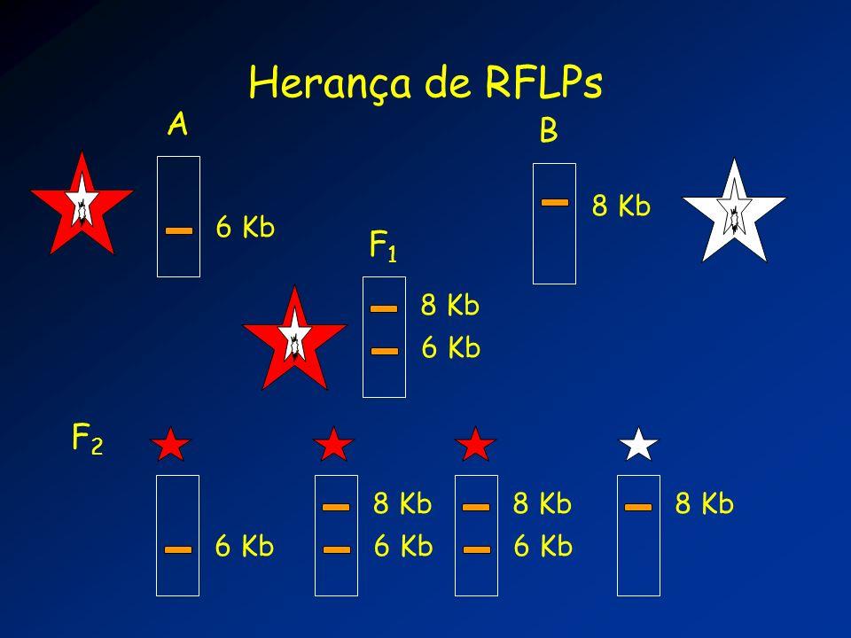 6 Kb A Herança de RFLPs 8 Kb B 6 Kb F1F1 8 Kb 6 Kb 8 Kb 6 Kb 8 Kb F2F2
