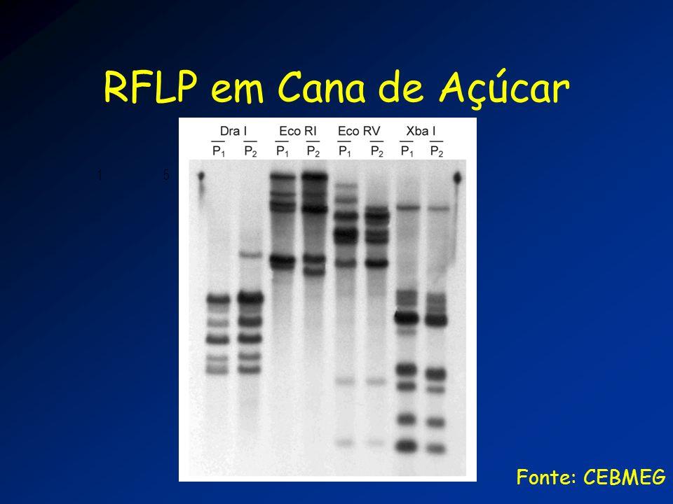 RFLP em Cana de Açúcar 1 5 10 15 20 Fonte: CEBMEG