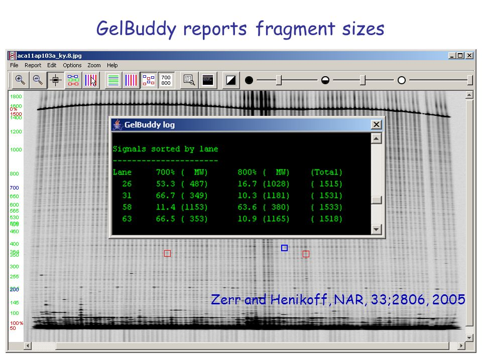 GelBuddy reports fragment sizes Zerr and Henikoff, NAR, 33;2806, 2005
