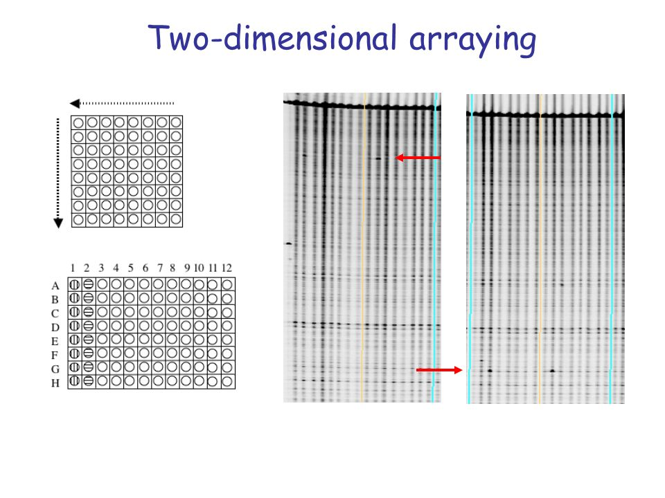 Two-dimensional arraying