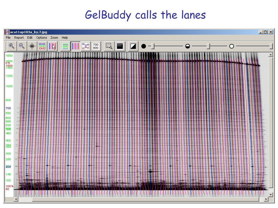 GelBuddy calibrates the lanes