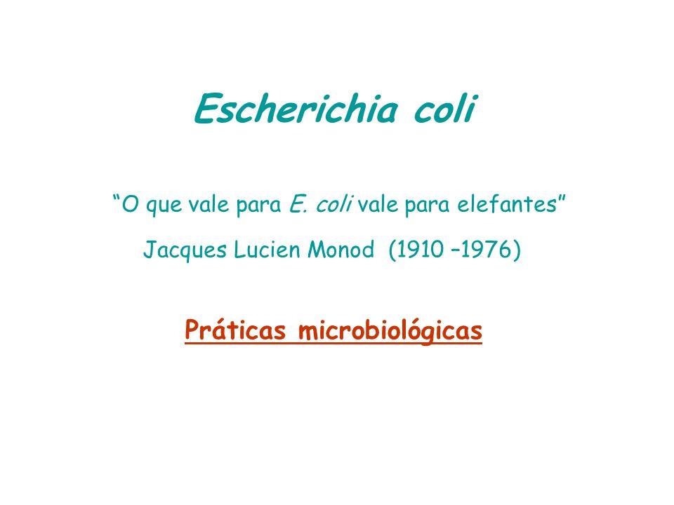 Escherichia coli O que vale para E. coli vale para elefantes Jacques Lucien Monod (1910 –1976) Práticas microbiológicas