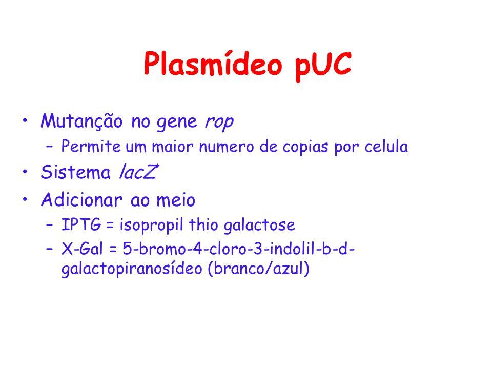 Plasmídeo pUC Mutanção no gene rop –Permite um maior numero de copias por celula Sistema lacZ Adicionar ao meio –IPTG = isopropil thio galactose –X-Ga