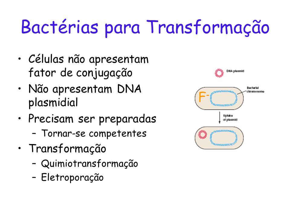 Bactérias para Transformação Células não apresentam fator de conjugação Não apresentam DNA plasmidial Precisam ser preparadas –Tornar-se competentes T