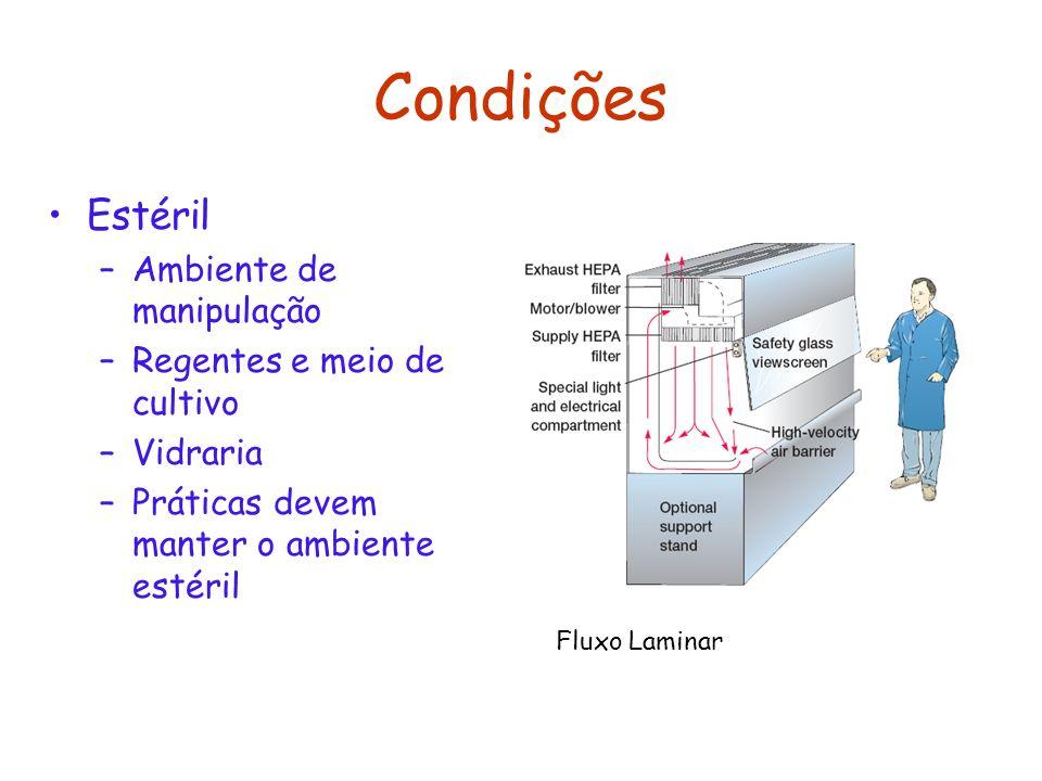 Condições Estéril –Ambiente de manipulação –Regentes e meio de cultivo –Vidraria –Práticas devem manter o ambiente estéril Fluxo Laminar
