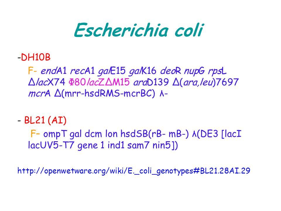 Escherichia coli -DH10B F- endA1 recA1 galE15 galK16 deoR nupG rpsL ΔlacX74 Φ80lacZΔM15 araD139 Δ(ara,leu)7697 mcrA Δ(mrr-hsdRMS-mcrBC) λ- - BL21 (AI)