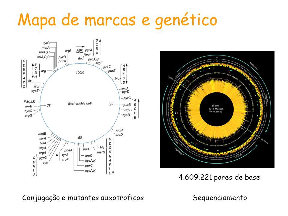 4.609.221 pares de base Mapa de marcas e genético SequenciamentoConjugação e mutantes auxotroficos